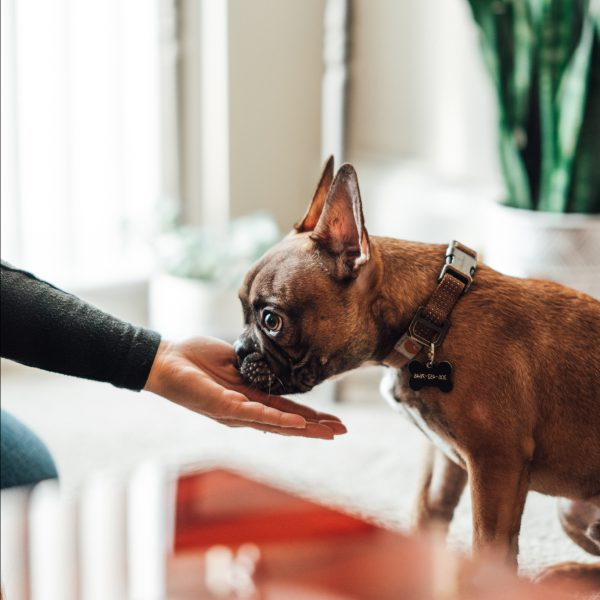 A dog receiving a treat from its owner